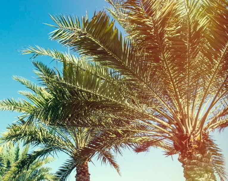 Soñar con palmeras